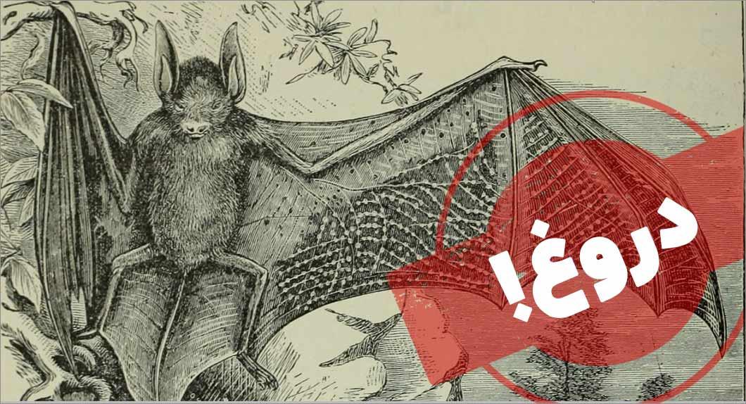 شایعه: کرونا از «خوردن» خفاش زنده آمده است!